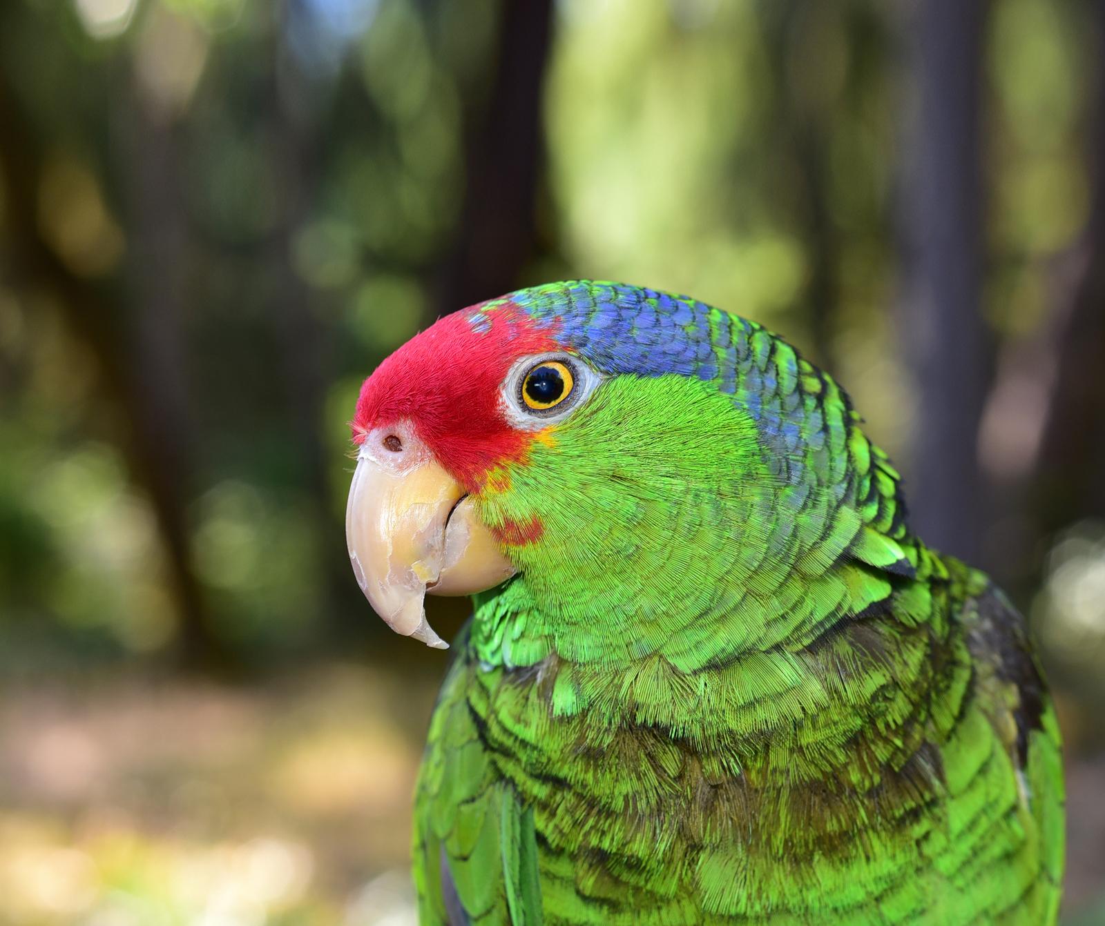avian-v2