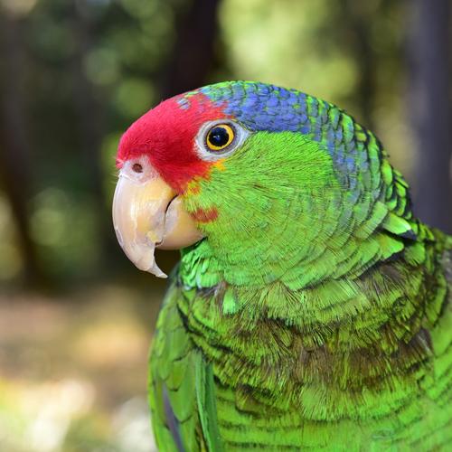 hm-avian1
